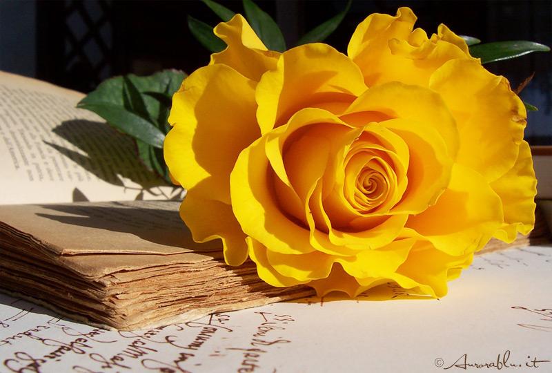 una rosa per chi passa dal mio blog